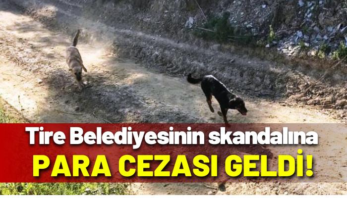 Tire Belediyesi bakıma muhtaç 17 köpeği Germencik'te ölüme terk etti cezadan kurtulamadı
